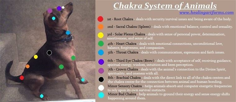 animal chakra pic